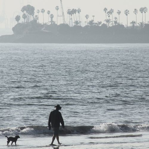 Rear view full length of man walking with dog on shore at beach