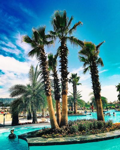 Sommergefühle Palm Tree Tree Sky Nature Day Blue Beauty In Nature Water Growth Tranquility Swimming Pool Outdoors Tree Trunk Cloud - Sky Scenics No People