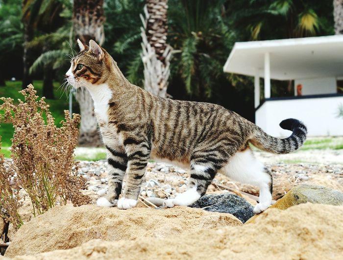 Katze Pet Photography  Cat Cat Lovers Katzenfoto Stubentiger Catpicture Pet Portrait Wildcat Katzenplatz EyeEm Nature Lover Katzen Cats Zypern Tierfotografie