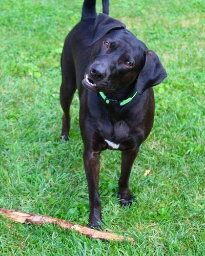 MyHeart❤ Pet Photography  Labrador Retriever Playtime Dogs Of EyeEm Dogandsticks EyeEm Best Shots Dogs Dogsandsticks Labrador