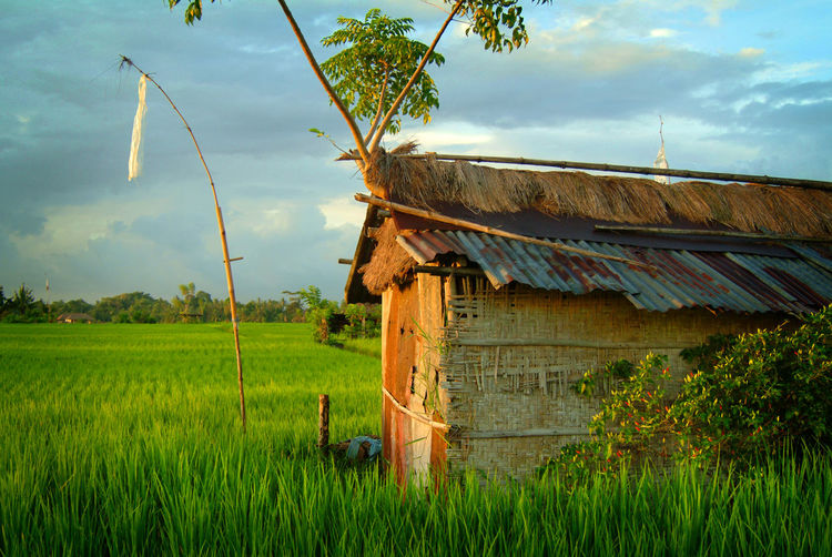 Bali Rice Field at Dawn. ASIA Bali Bali, Indonesia Rice Rice Paddy Agriculture Beauty In Nature Built Structure Cloud - Sky Crop  Day Farm Field Green Color Growth Landscape Nature No People Outdoors Plant Rice - Cereal Plant Rice Paddy Rural Scene Sky Southeast Asia