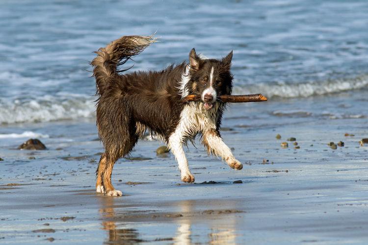 Dog having fun
