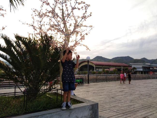 Tree Full Length Standing Mountain City Childhood Sky Hiker