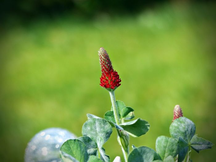 Plant Beauty In Nature Red Growth Freshness Flower Flowering Plant Close-up Nature Vulnerability  Fragility No People Day Beginnings Green Color Focus On Foreground Plant Part Leaf Selective Focus Bud Outdoors Flower Head