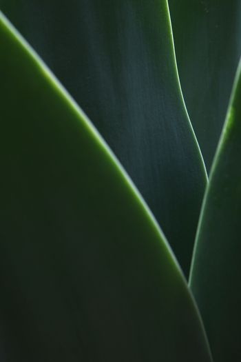 Line Aloe Leaf Leaves Lime Technical Green Color Plant Growth No People Plant Part Beauty In Nature Leaf Nature Natural Pattern Full Frame