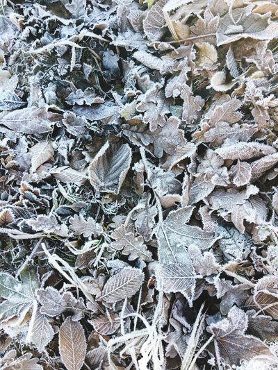 Winter Nature Frozen Leaves