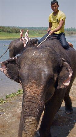 Chitwan Chitwan National Park Elephant Elephant Ride Elephant Trekking Leicacamera Leisure Activity Nepal Nepaleseguy Tourist