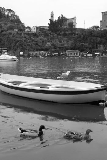 boat & birds Popckorn Boat Italy EyeEm Best Shots EyeEmNewHere Water Architecture Building Exterior Built Structure Nature Tree Day Sky Outdoors Bird