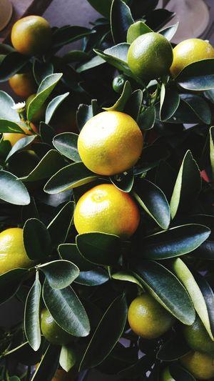 🍋🍋🍋 Lemon