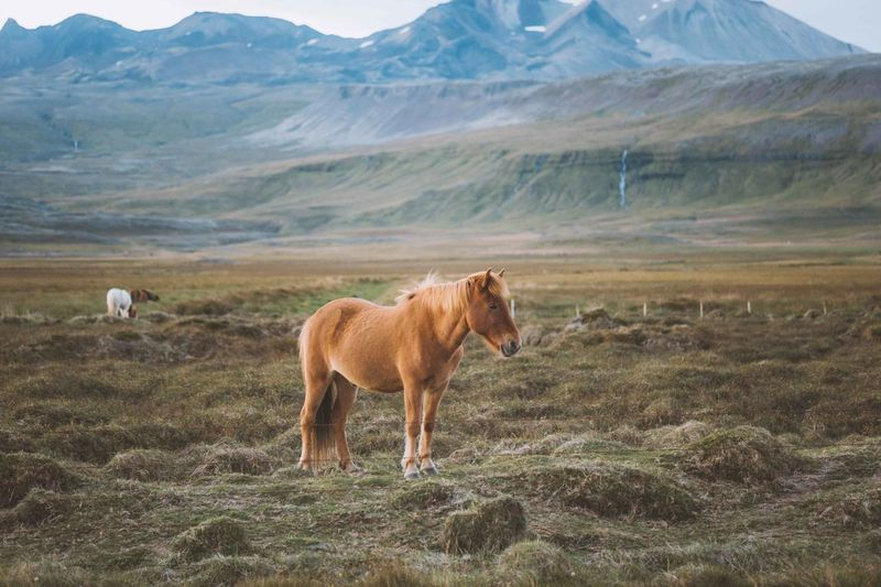 View of horse on landscape