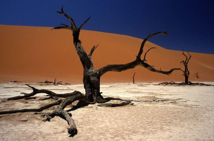 Nature Colour Of Life Colors Africa Namibia Landscape NamibiaPhotography Namib Desert Desert Naukluft National Park Sand Sand Dunes Sesriem, Namibia Deadvlei Acacia Acacia Tree