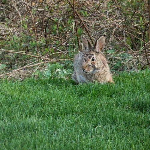 Peter Rabbit! Panasonic Lumix DMC-FZ80 One Animal Grass Animal Animal Themes Plant Mammal Animal Wildlife