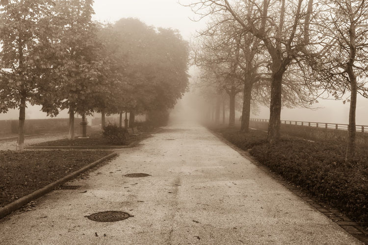 Footpath Amidst Trees At Park During Foggy Weather