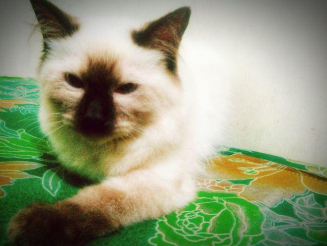 Hash. Cats Of EyeEm Catsofinstagram Catstagram Catslife Stopyulin2015