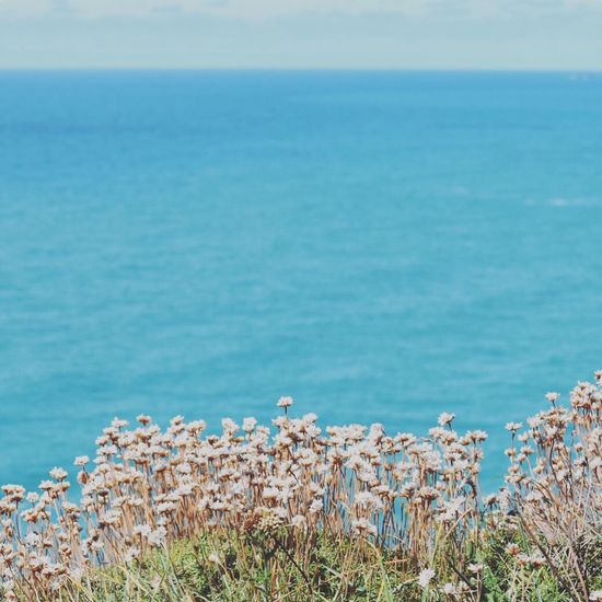 Summer ☀ Nikonphotography Photooftheday Summer Vibes Taking Photos Cornwall Kernow Coastal_collection Bestoftheday Nikon D5500 Summervibes Coastal Beachphotography Taking Pictures Natural Beauty Coastline Coastline Landscape Summertime Landscape_Collection Landscape Beachlife Colours