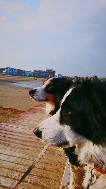 Caorle Italy Walking Around Nature Italy🇮🇹 Outdoor Photography Sony Xperia Z3 Autunno🍁🍁🍁 Pratography Outdoor Border Collie Colour Of Life Spiaggia Sole Mare Beachphotography Day Outdoors Tranquility Life Is Good Outdorphotography My Smartphone Life 4zampe Foto Fotography @Chiara Zorzetto Mare Sea