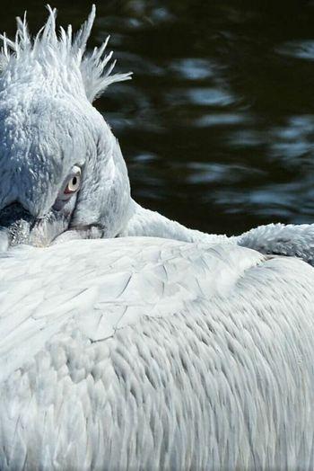 Bird One Animal Animal Themes Animal Wildlife Bird Photography Pelican