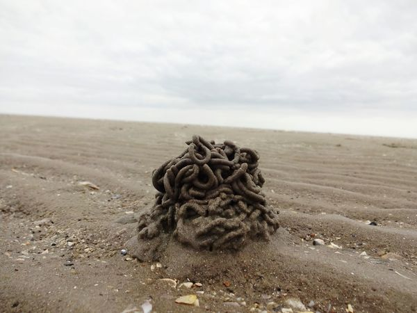 Nature Tranquility Day Outdoors No People Beauty In Nature Sand Sky Close-up Seascape North Sea Wattwurm Sea Watt Wattenmeer Cloudy Day Spaghettis Mudflat Tideland Lugworm Sandworm Weite Extention