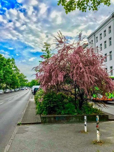 Tree Sky Road