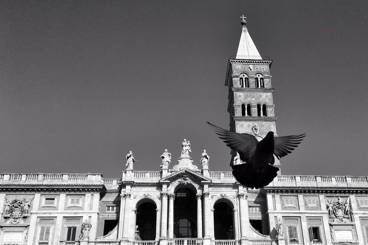 Pigeon Church Blackandwhite Rome Urban Urbanlandscape The Week Of Eyeem Italy Cityscape Sky Historical Building No People Birds EyeEmNewHere