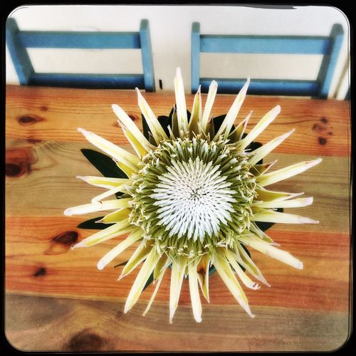 Flower Freshness Table Flower Head Protea Decoration Outside Space Table Setting