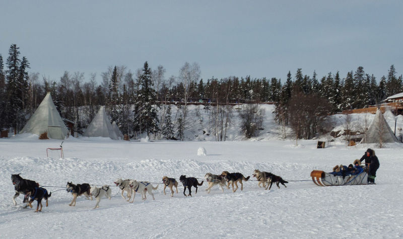 Dog Sledding Adult Animal Themes Beauty In Nature Canada Cold Cold Temperature Day Dog Domestic Animals Exciting Group Of People Large Group Of Animals Mammal Nature Outdoors Pack Of Dogs People Sky Snow Snow Covered Transportation Tree Winter Yellowknife An Eye For Travel