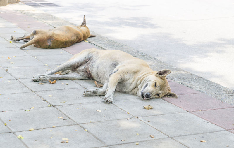 dog sleep Animal Animal Family Animal Themes Canine Day Dog Domestic Domestic Animals Footpath Full Length High Angle View Lying Down Mammal No People One Animal Pets Relaxation Resting Sleeping Vertebrate