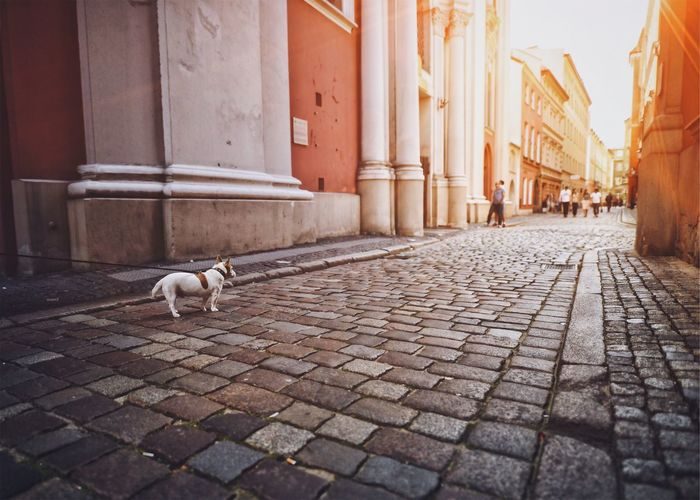 EyeEm Selects City Life Dog Sunny Day Streetphotography Wide Shot Baroque One Animal Architecture Your Ticket To Europe