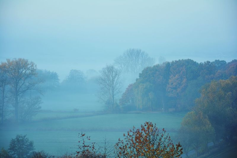 Trees And Crops On Field In Foggy Weather