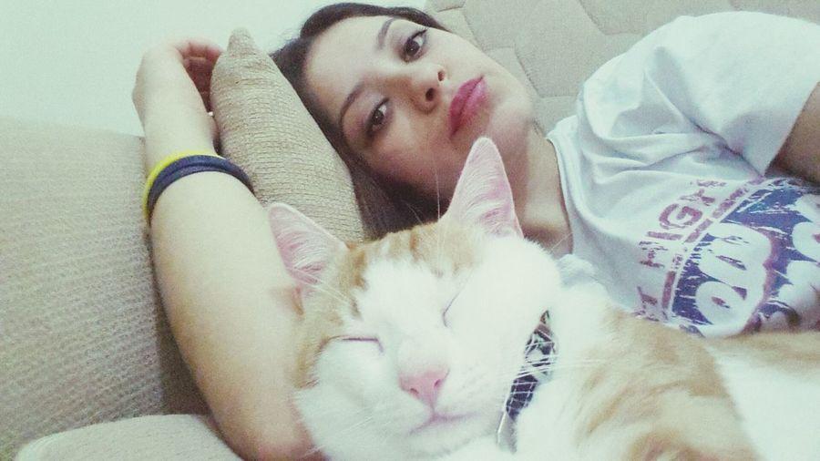 Cat Love 14subatainat Relaxing Bilecik Yellow