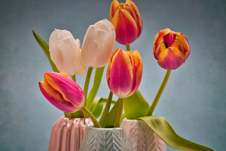 Close-up of pink tulips in vase