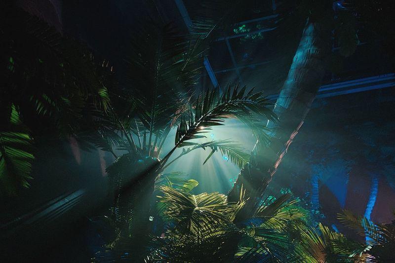 Palm Tree Tree