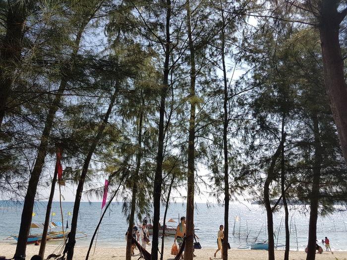 Nature Tree Sea Beach Water Summer Vacation EyeEmNewHere