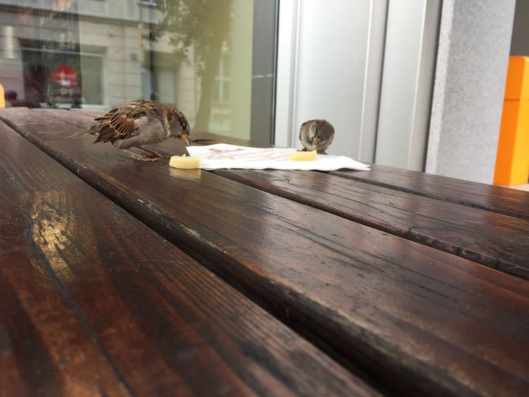 Sparrows Eating Animals Taking Photos