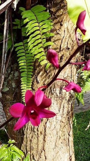 contrastin Flora Taking Photos Shiny Streamzoofamily