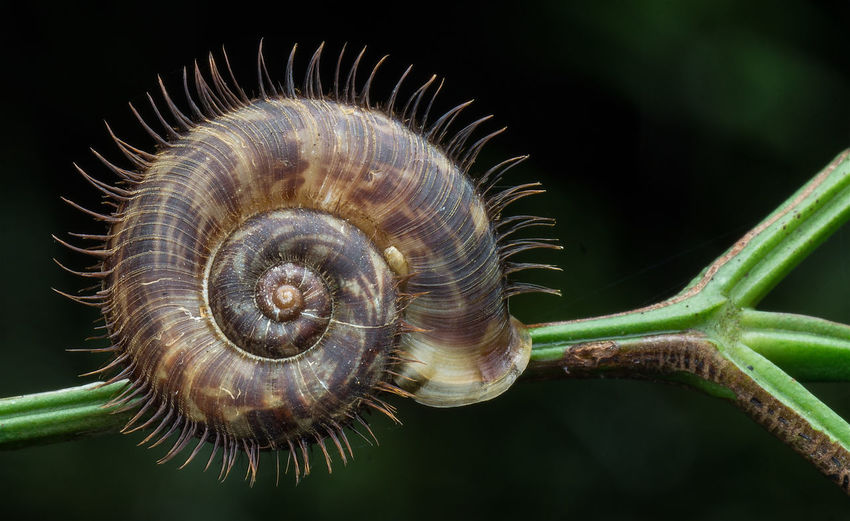 Hairy Snail Animal Wildlife Close-up Hairy Snail Nature Nature Snail Spiral Sunshine Wildlife Wildlife & Nature