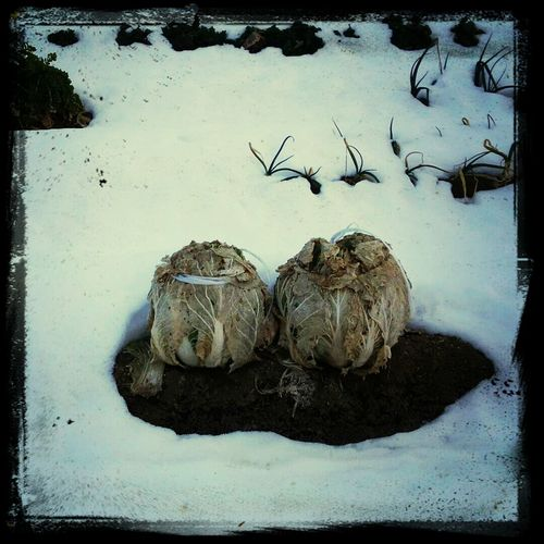 Mr. and Mrs. Napa(ゝω・) Winter Wonderland Inspiration Snowwhite