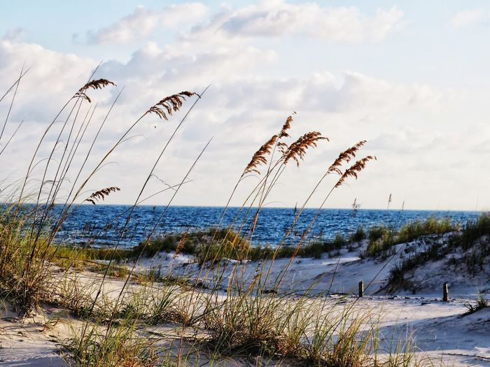 sand dunes and ocean Beach Sea Water Sky Horizon Over Water Shore Scenics Sand Tranquility Ocean Calm Tranquil Scene Sandy Beach Remote Idyllic Sunset Scenic View Seascape