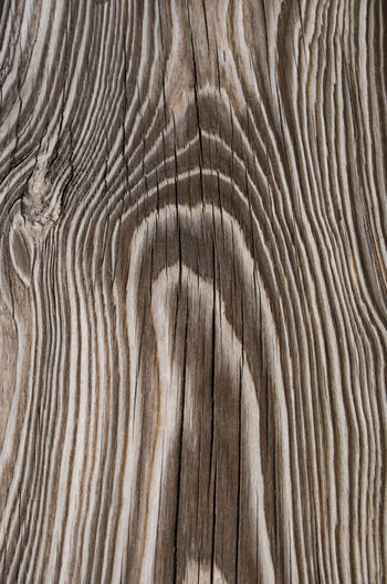 Backgrounds Full Frame Textured  Wood Grain Pattern Wood Natural Pattern No People Tree Close-up Wood - Material Brown Nature Abstract Timber Extreme Close-up Striped Simplicity Pine Tree Material WoodLand Textured Effect Abstract Backgrounds Pine Wood