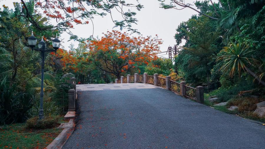 Tree Autumn Sky