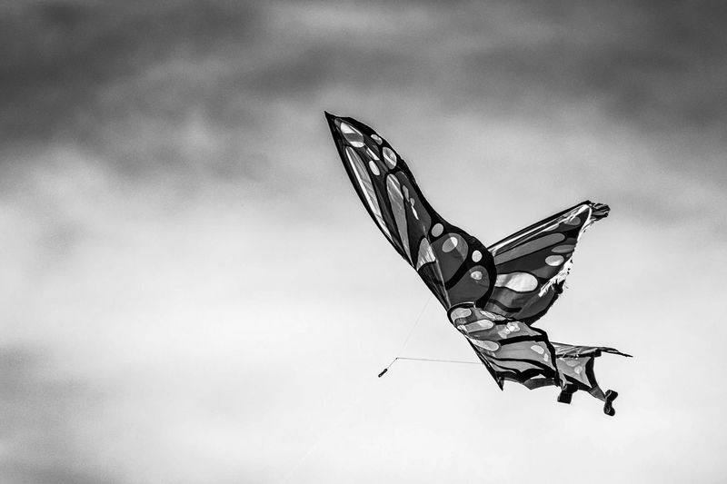 Low angle view of butterfly flying