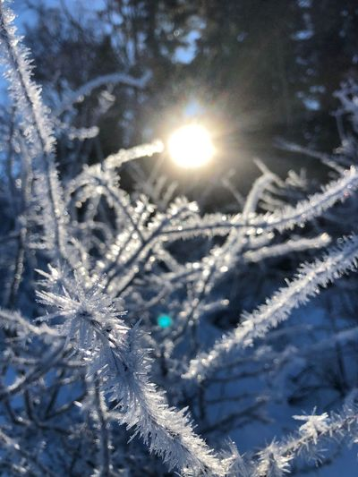 Ice Crystal Outdoors Close-up Frost Cold Ice No People Beauty In Nature Sunlight