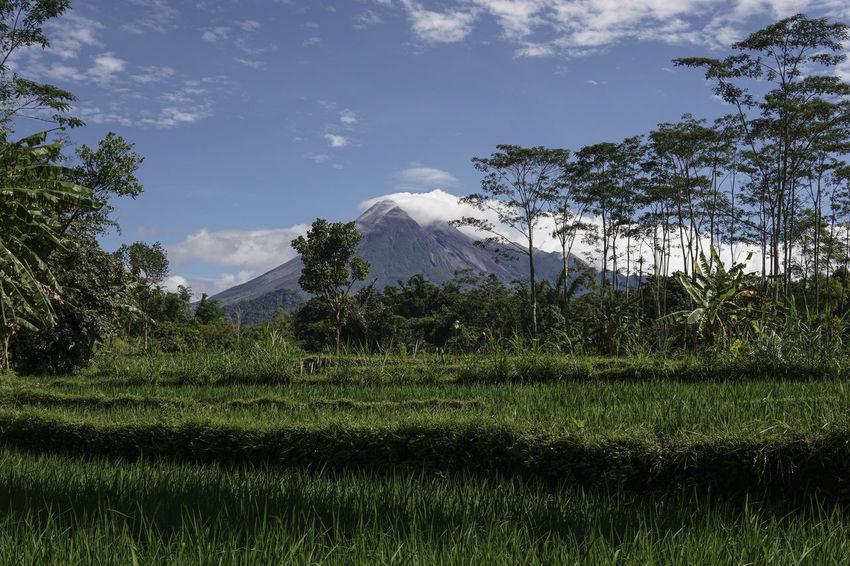 Merapi Volcano Beauty In Nature Blue Sky Day Grass Green Growth Landscape Merapi Mountain Nature No People Outdoors Scenery Sky Tree Volcano