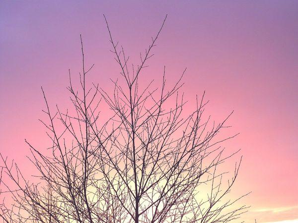 Pretty sunset Sunset Pink Skies Purple Sky Beautiful Tree Winter Sun Winter Sunset La La Land Beauty In Nature Sky Outdoors No People Clear Sky Tranquil Scene Nature