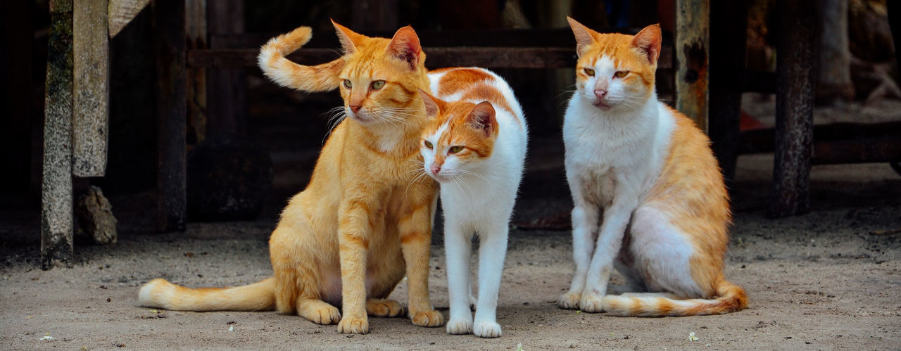 Cats Looking Away On Footpath