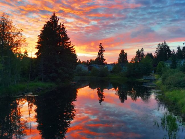 Washington State summer sunrise. Reflection Tree Sunset Sky Lake Water Beauty In Nature Nature Tranquil Scene Orange Color Scenics Cloud - Sky No People Silhouette Waterfront Tranquility Outdoors Growth Day
