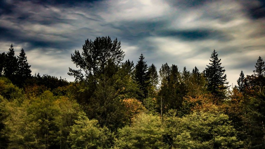 Plant Cloud - Sky Tree Sky Beauty In Nature Growth Nature Tranquility No People Tranquil Scene Scenics - Nature Forest Day Land Non-urban Scene Low Angle View Outdoors Pine Tree Coniferous Tree Green Color