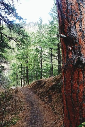 Mount Sanitas Trailhead Winding Trails Hiking Solitude Nature Forest Hiking Tree Sky Go Higher