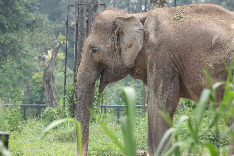 Animal Animal Themes Animal Trunk Animal Wildlife Animals In The Wild Day Elephant Grass Growth Indian Elephant Nature No People Outdoors Plant Tree Trunk
