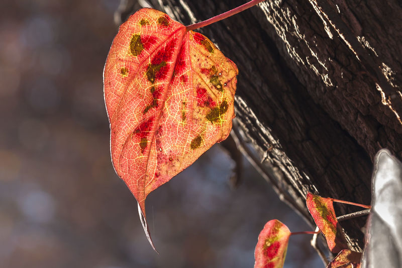 Autumn Leaf Autumn Leaf Fall Beauty Fall Colors Autumn Beauty In Nature Change Close-up Day Dry Fall Leaf Focus On Foreground Leaf Nature No People Outdoors Tree